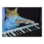 Keyboard Cat!